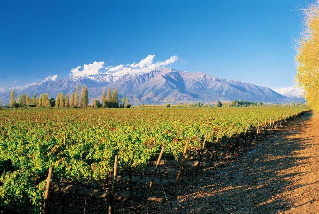 concha-y-toro-puente-alto-vineyard