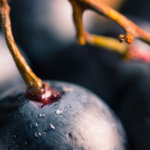 יינות ירוקים מהעולם